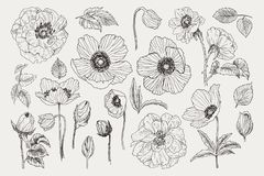 Big set of monochrome vintage flowers vector elements, Botanical flower decoration shabby chic illustration wild roses. Vector collection of hand drawn plants stock illustration