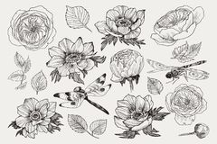 Big set of monochrome vintage flowers vector elements with insect dragonfly, Botanical flower decoration shabby chic. Vector collection of hand drawn plants stock illustration