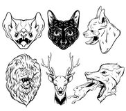 Vector collection of hand drawn realistic illustration of animals. Stock Photos