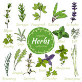 Vector collection of herbs. Royalty Free Stock Photography