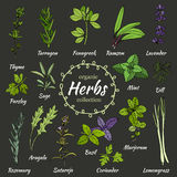 Vector collection of herbs. Royalty Free Stock Images