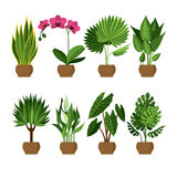 Vector collection of indoor, house plants in pots. Stock Image