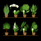 Vector collection of indoor, house plants in pots on a shelf. Royalty Free Stock Photos