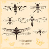 Vector collection of insects isolated on vintage background Stock Image