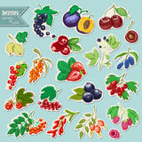 Vector collection of isolated garden and wild berries. Sticker elements Stock Photography