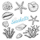 Vector collection of isolated sea shells, coral and starfish. Hand drawing illustration. Vector illustration for your design Stock Photo