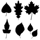 Vector Collection of Leaf Silhouettes Royalty Free Stock Photography
