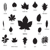 Vector collection of leaf silhouettes Stock Images