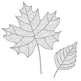 Vector Collection of Leaf Silhouettes with thin Stock Photos