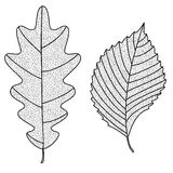 Vector Collection of Leaf Silhouettes with thin Royalty Free Stock Photos