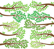 Vector Collection of Leafy Tree Branch Silhouettes Royalty Free Stock Photos