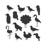 Vector Collection of nature black bird wildlife animal silhouettes. Royalty Free Stock Photo