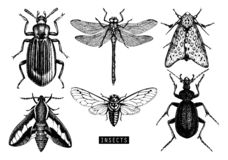 Vector Collection Of High Detailed Insects Sketches. Hand Drawn Butterflies, Beetles, Dragonfly, Cicada, Bumblebee Illustrations O Stock Photo
