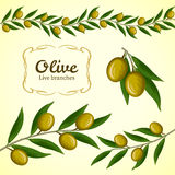 Vector collection of olive branch, green olives Royalty Free Stock Photography