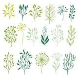Vector collection of plants Royalty Free Stock Photography