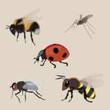 Realistic flying insects a  collection Royalty Free Stock Photo