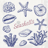 Vector collection of sea shells, coral and starfish on paper. Hand drawing illustration Royalty Free Stock Photos