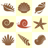 Vector collection of sea shells Stock Image