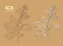 Vector collection of silhouette mate branches. Shape vintage set Stock Photography