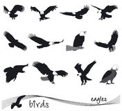 Vector collection of silhouettes of eagles Stock Photos