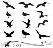 Vector collection of silhouettes of gulls. Vector collection of silhouettes of birds, gulls Stock Photos