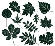 Set of dark silhouettes of leaves of various shapes. Vector illustration. Vector collection of silhouettes of maple leaves, chestnut, aspen, oak, mountain ash Stock Photo