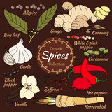 Vector collection of spice for food and cosmetic. Stock Photography