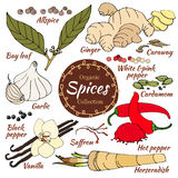 Vector collection of spice for food and cosmetic. Stock Photo