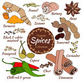 Vector collection of spice isolated on white. Royalty Free Stock Photos