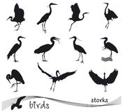 Vector collection of stork silhouettes Stock Images