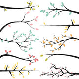 Vector Collection of Tree Branches Royalty Free Stock Image