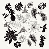 Vector collection of tropical plants,  leaves and flowers isolat Royalty Free Stock Images