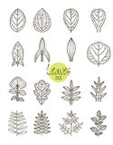 Vector collection of varieties of leaf shape Stock Image