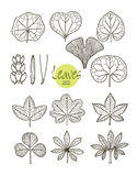 Vector collection of varieties of leaf shape Royalty Free Stock Photo