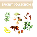 Vector collection of watercolor herbs Stock Photo