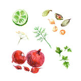 Vector collection of watercolor herbs Stock Images