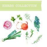Vector collection of watercolor herbs Stock Image