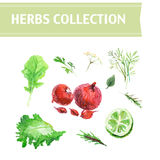 Vector collection of watercolor herbs Royalty Free Stock Photography