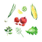 Vector collection of watercolor herbs Royalty Free Stock Image