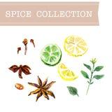 Vector collection of watercolor herbs Royalty Free Stock Photos