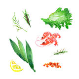 Vector collection of watercolor herbs Stock Photography