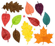 Vector Collection of Watercolor Style Autumn Leaves Stock Photos