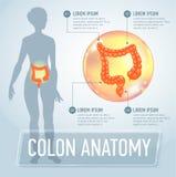 Vector colon infographics banner illustration Stock Photos