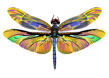 Vector color art dragonfly nature wildlife Stock Images