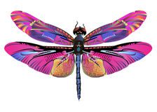 Vector color art dragonfly nature wildlife Royalty Free Stock Photos