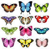Vector color butterfly illustrations Royalty Free Stock Images