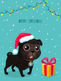 Vector color illustration of christmas dog. Christmas card. Cute black pug in Santa`s hat. Symbol of 2018. Vector greeting card with pug, gift box, text Merry Vector Illustration
