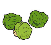 Vector color illustration, vegetables, Brussels sprouts Stock Photography
