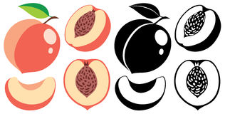 Vector color and monochrome peaches Stock Image