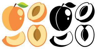 Vector color and monochrome peaches Stock Photo